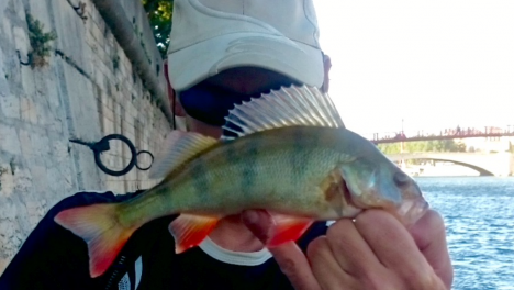IMG_2322