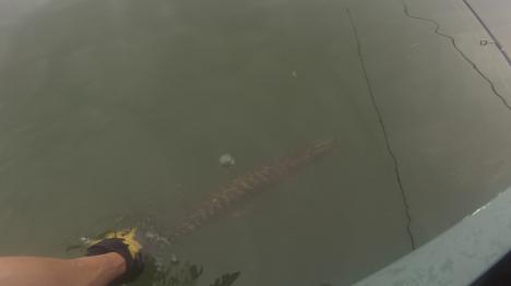 gl-boat-release