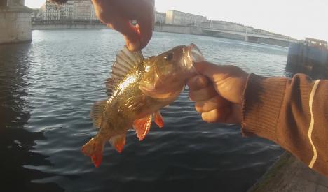 perche-33-qgf
