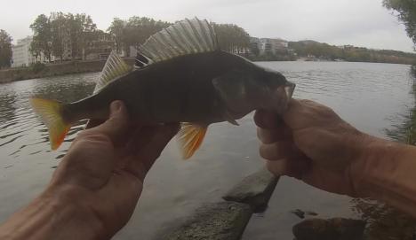 perche-saone-55